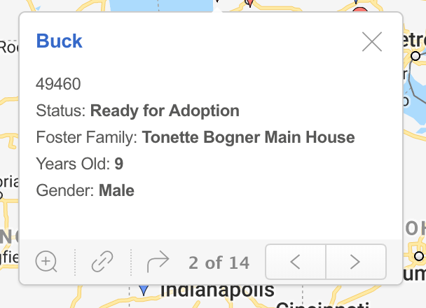 - Some locations have more than one dog being fostered. You can cycle through the dogs at a location by clicking on the arrows at the bottom of the card.Clicking on the name of the dog will take you to that dog's Jira record where you can view surrender information, current status, pictures, etc.