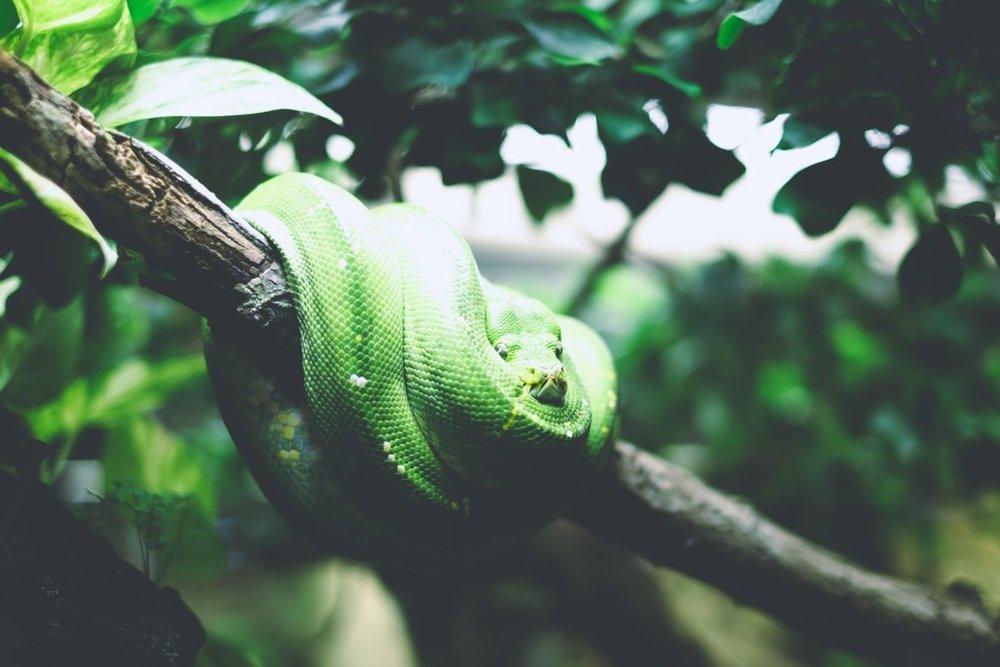 snake-jonathan-.jpg