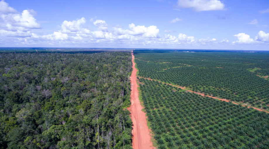 Forest on the left - Palm oil plantation on the right