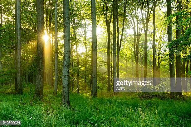 Photo by AVTG/iStock / Getty Images