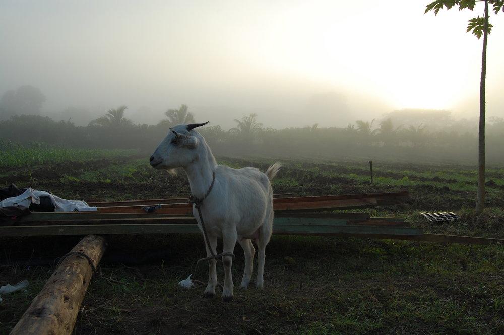 Fijian Highlands
