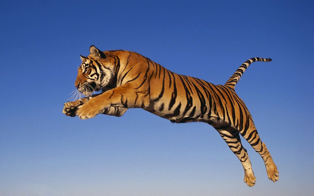 """…no tiger will jump if it cannot see where it will land…"" -"