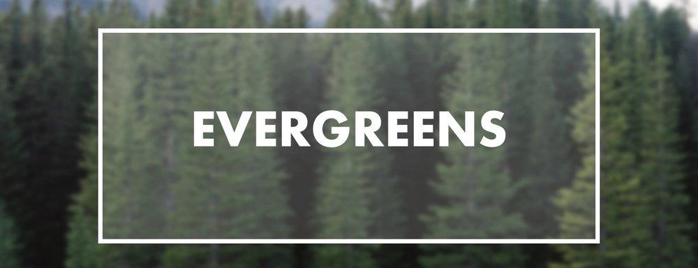 EVERGREENS+.jpg