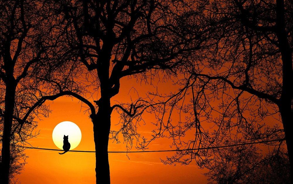 STRANGLED SUN - By: Wanda Deglane