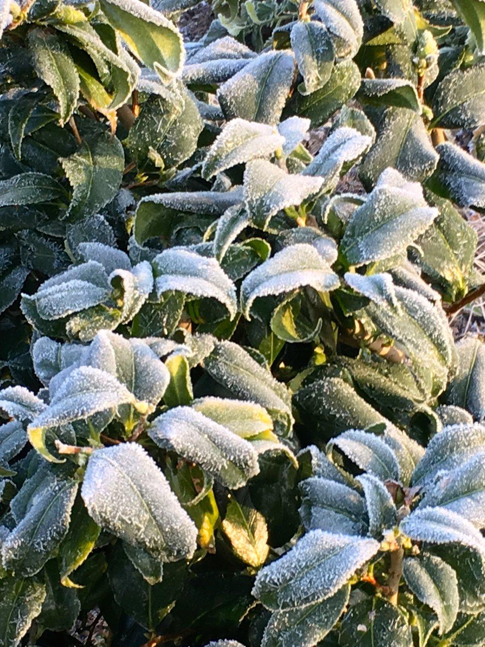 winterleaves.jpg