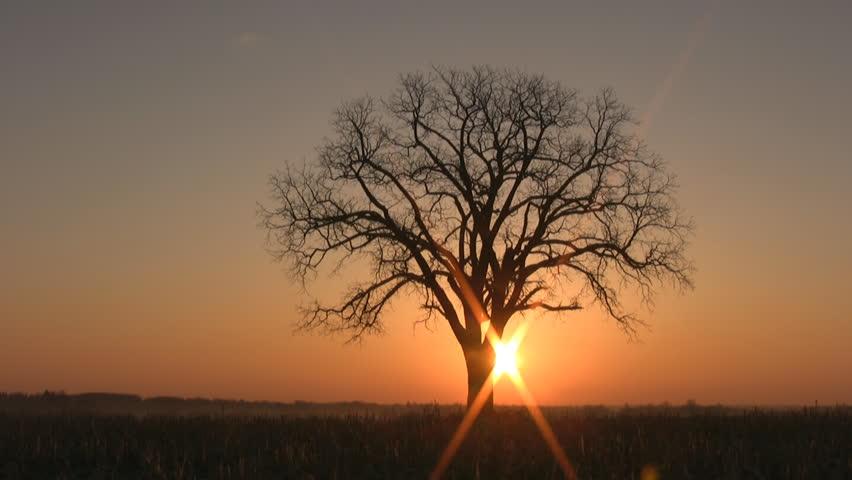 tree-sunrise