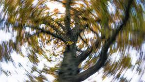 spinning tree