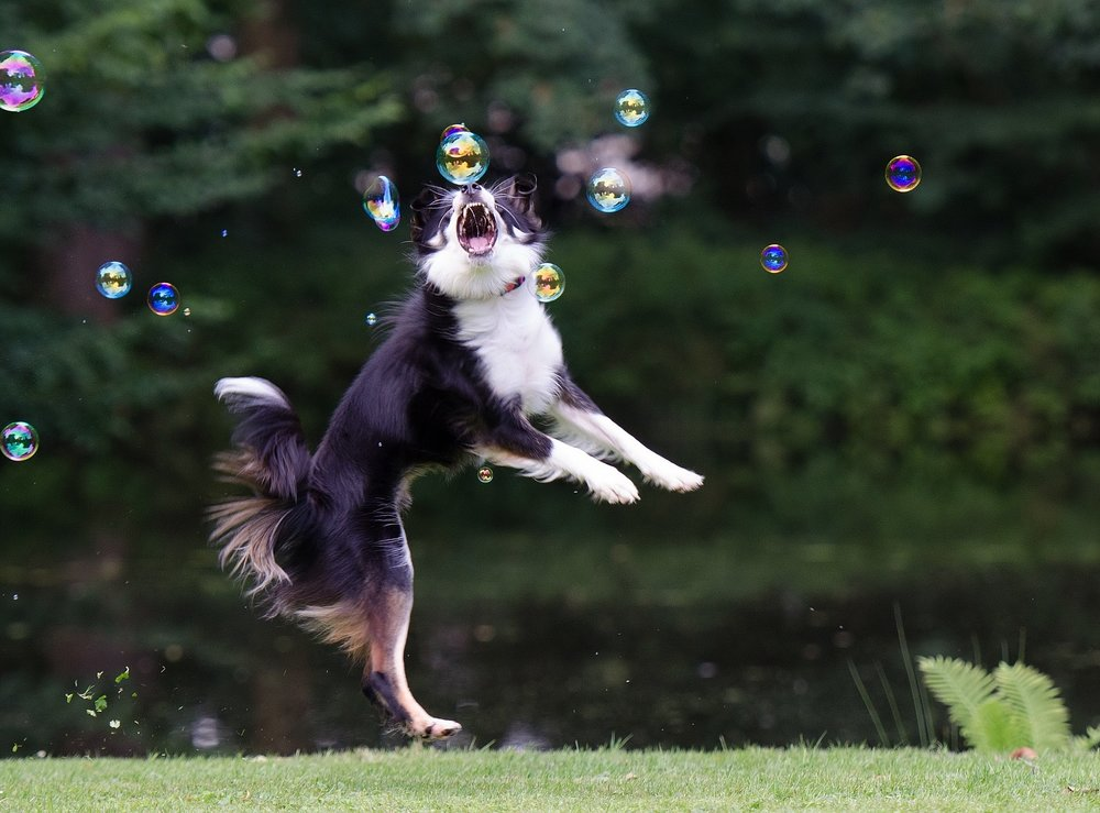 Jump Like A Star -