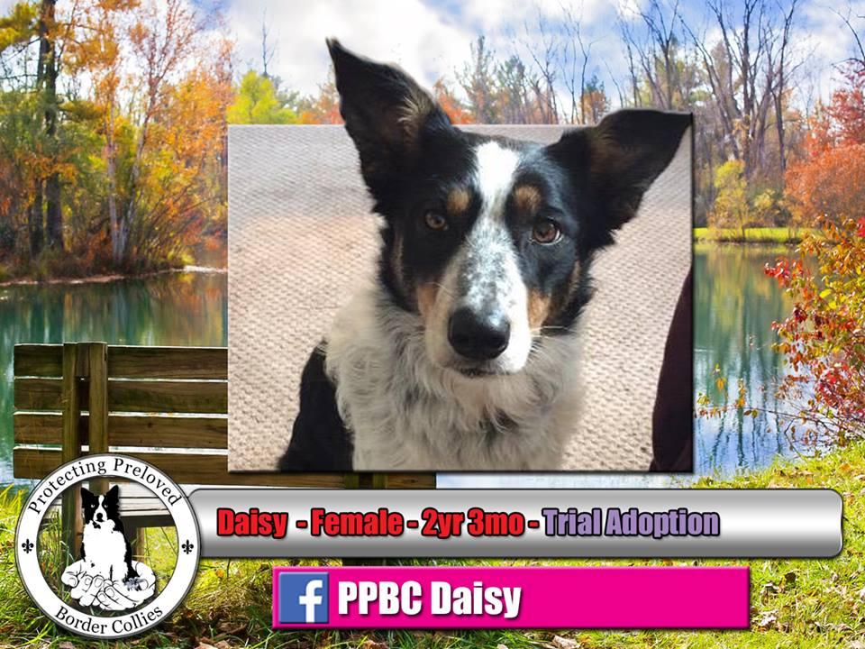 October Daisy.jpg