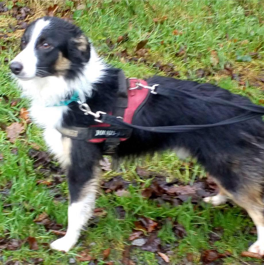 Cooper a 1 1/2 year old boy
