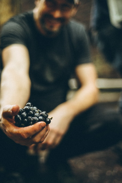 IMG_1197_grapes.JPG