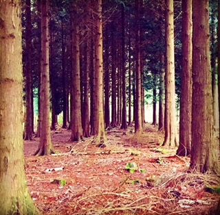 woodland pic.jpg