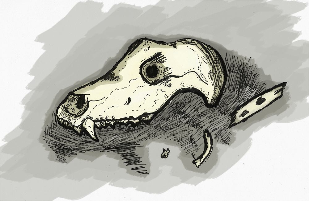 skull_col_small.png