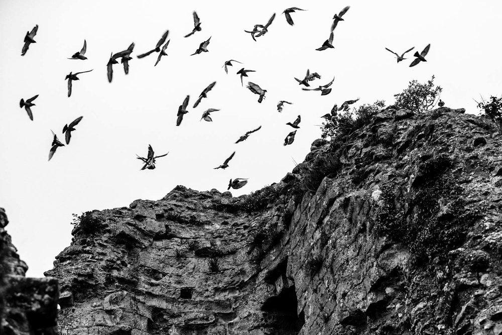 english-heritage-pevensey-castle-birds-andrew-maybury.jpg