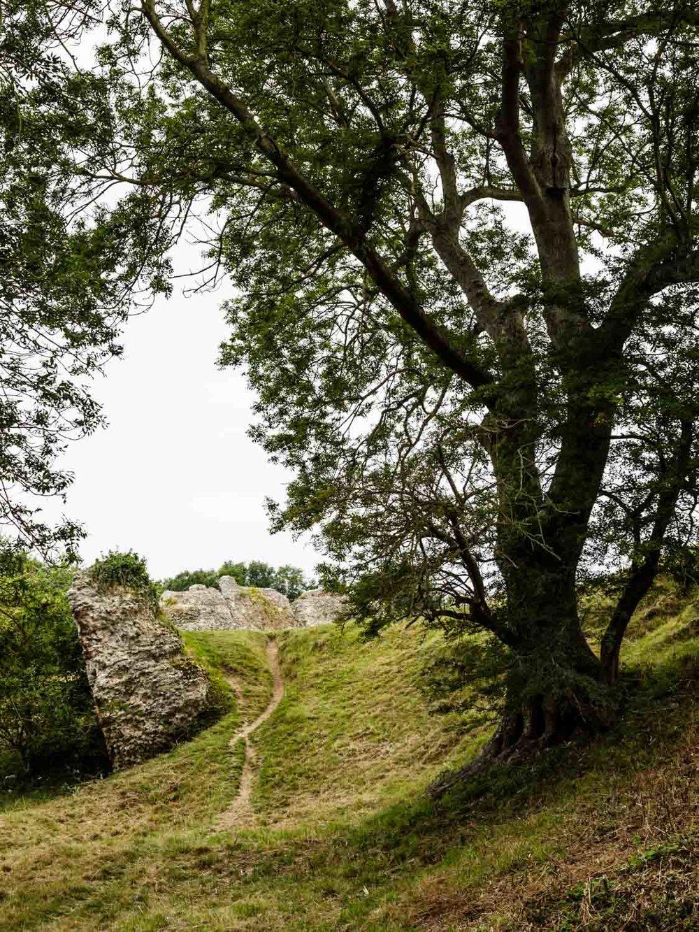 english-heritage-pevensey-castle-grounds-andrew-maybury.jpg