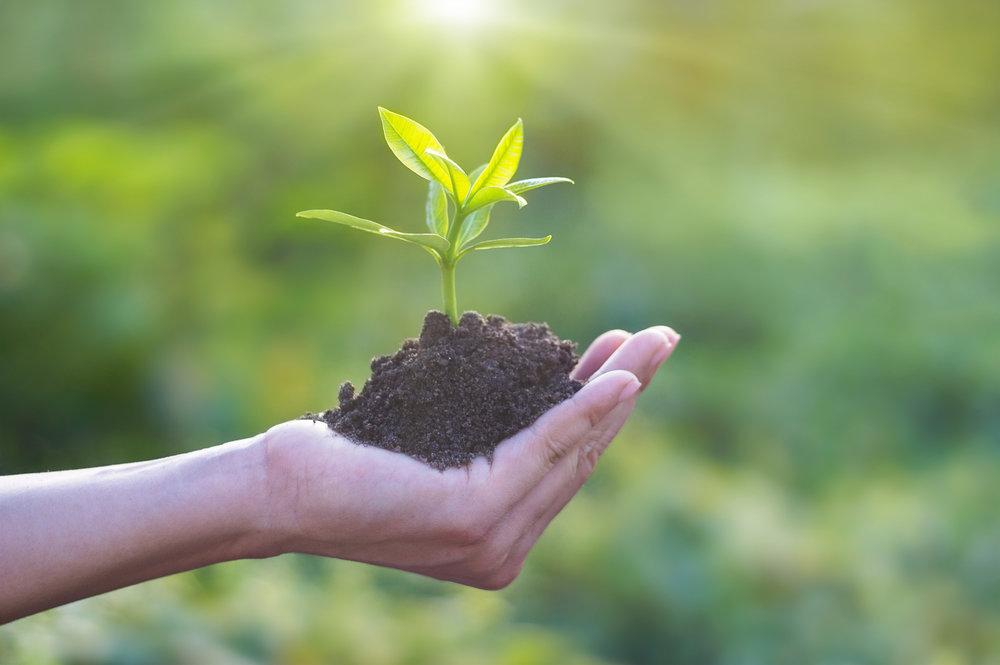 TREE PLANTING -