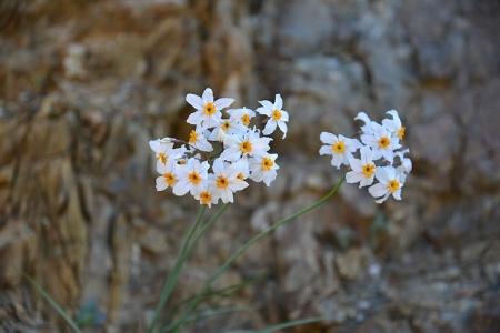 flowering-desert-960121_640.jpg