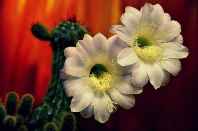 cactus-3753529_640.jpg