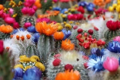 cactus-2721269_640.jpg
