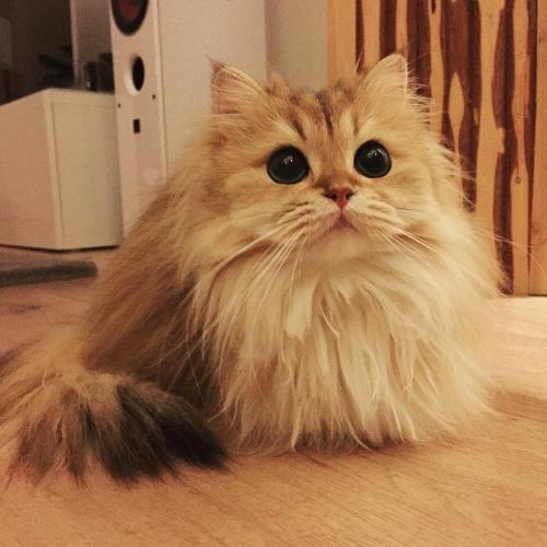 kittie.jpg
