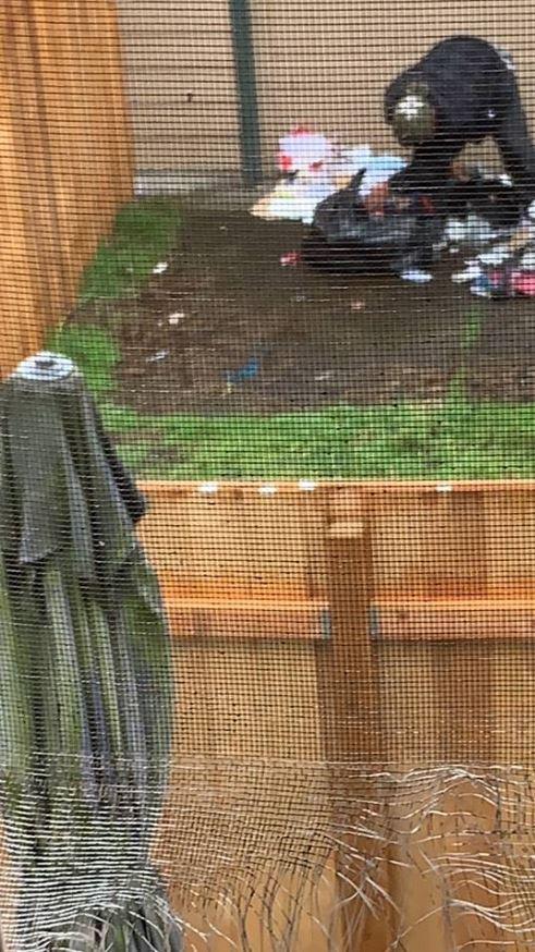 backyard 1.3.19.JPG