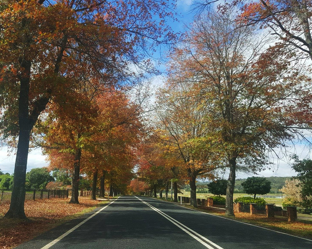 Autumn Trees of Tenterfield