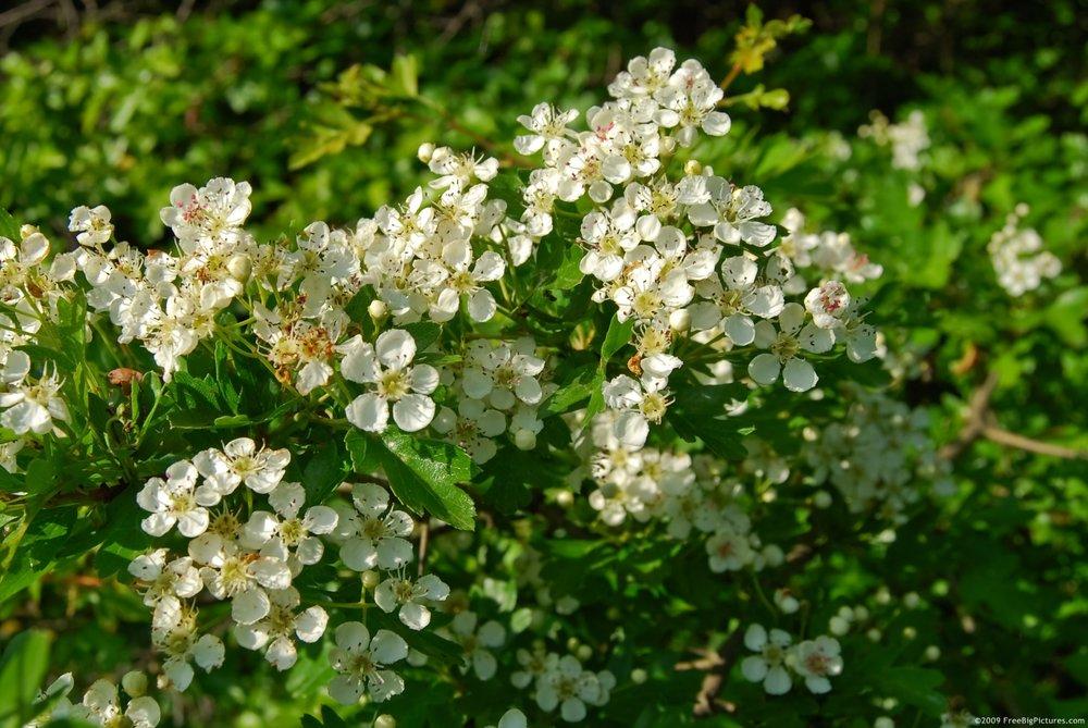 tree-bloom.jpg