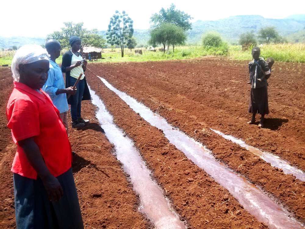 Farmer Asiimwe Mary (in red) watches water flow into furrows in a direct-fill system.
