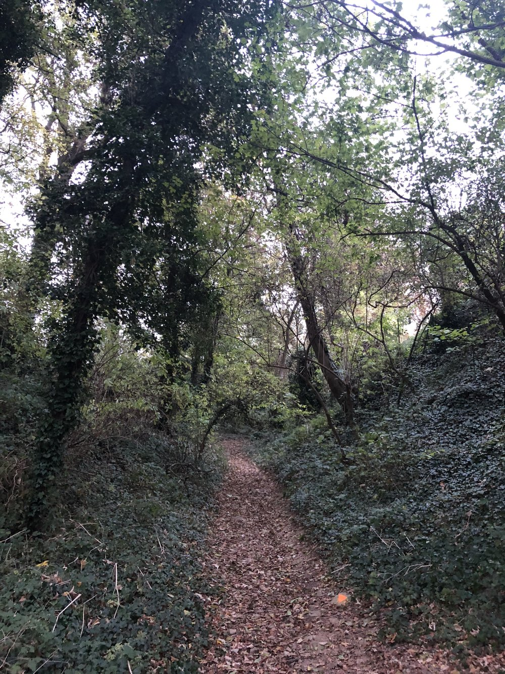 A beautiful forest a few miles from Creil, France.