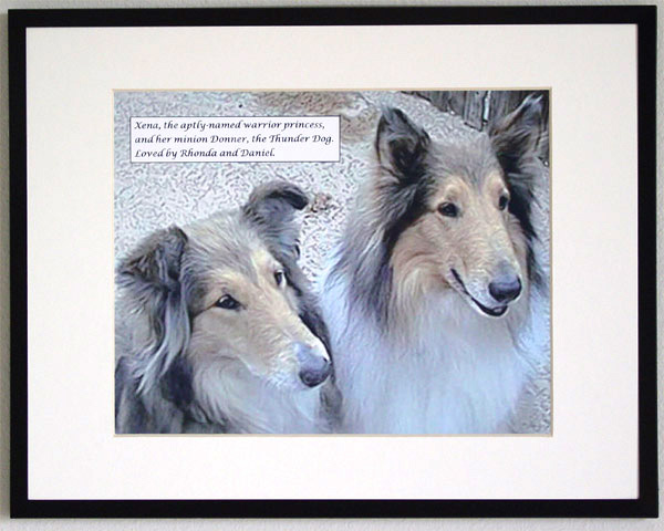 southland collie rescue-adopt collies southern california2.jpg