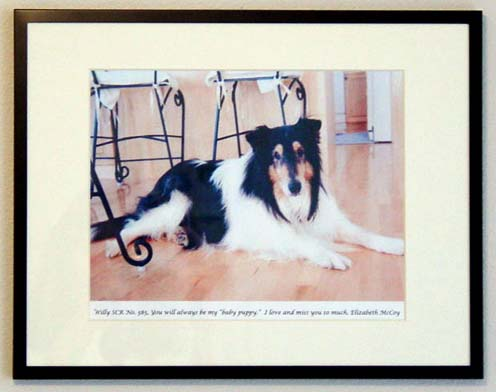 southland collie rescue-adopt collies southern california7.jpg