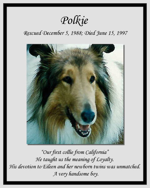 southland collie rescue-adopt collies southern california33.jpg