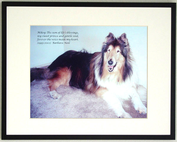 southland collie rescue-adopt collies southern california39.jpg