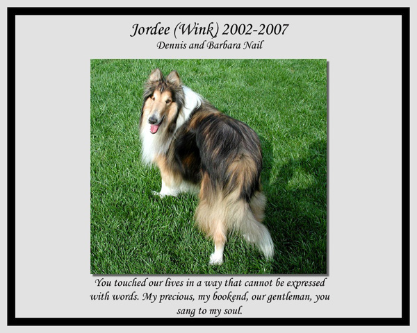 southland collie rescue-adopt collies southern california49.jpg