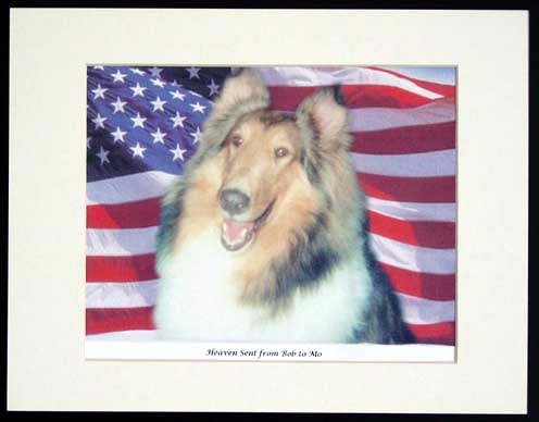 southland collie rescue-adopt collies southern california53.jpg