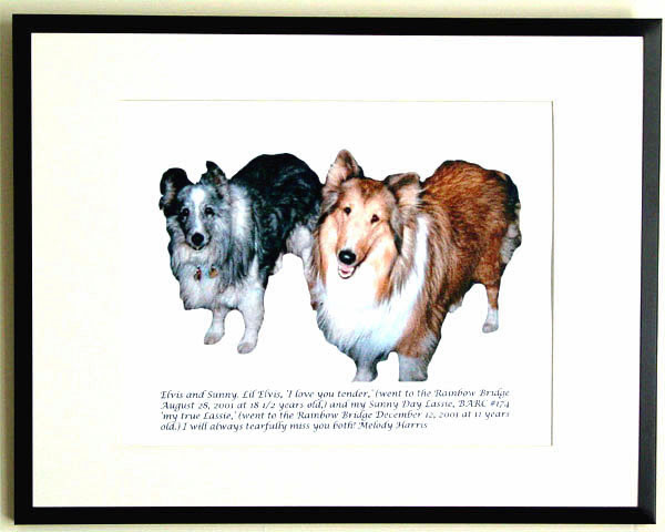 southland collie rescue-adopt collies southern california59.jpg