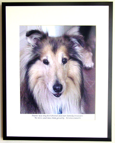southland collie rescue-adopt collies southern california64.jpg