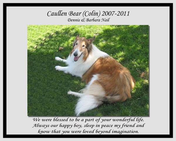 southland collie rescue-adopt collies southern california71.jpg