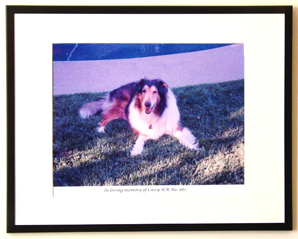southland collie rescue-adopt collies southern california74.jpg