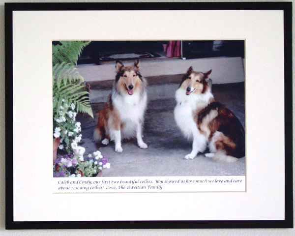 southland collie rescue-adopt collies southern california78.jpg
