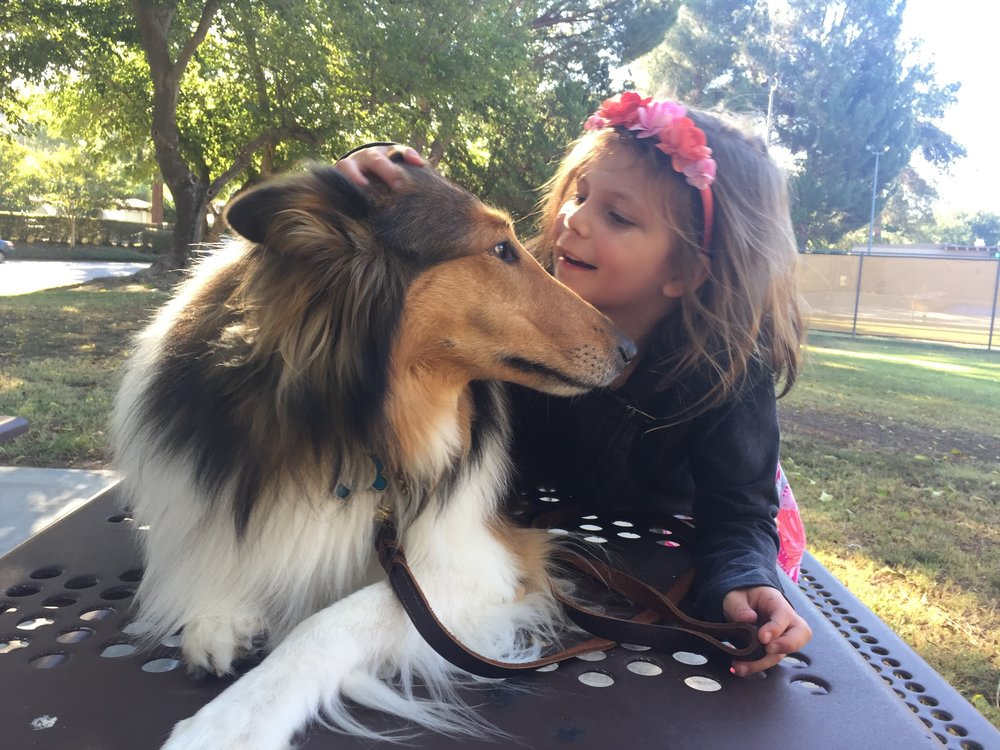 southland-collie-rescue-contact.JPG