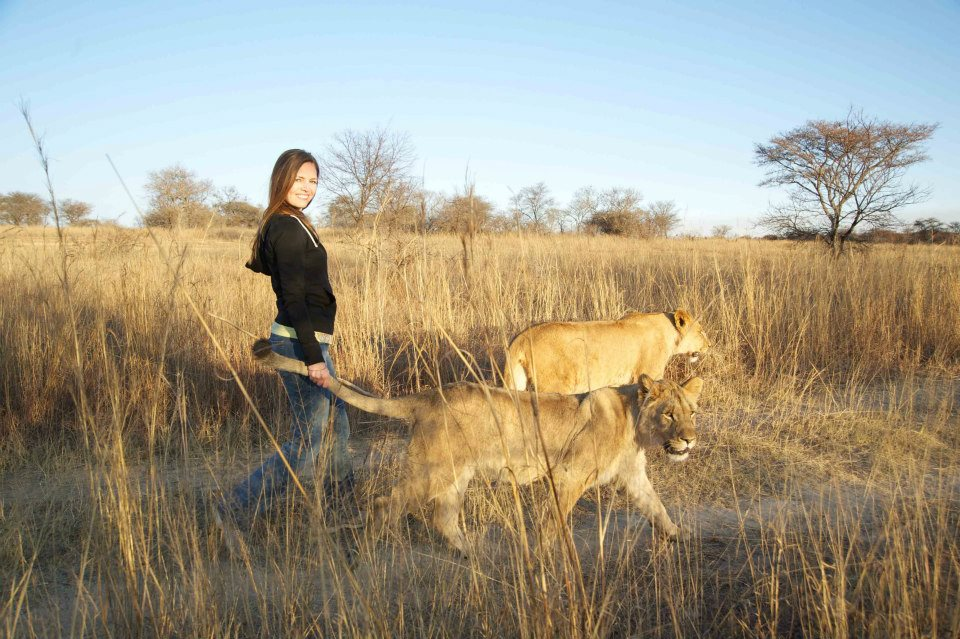 Above, here I am in 2012 walking with lions in Gweru, Zimbabwe.