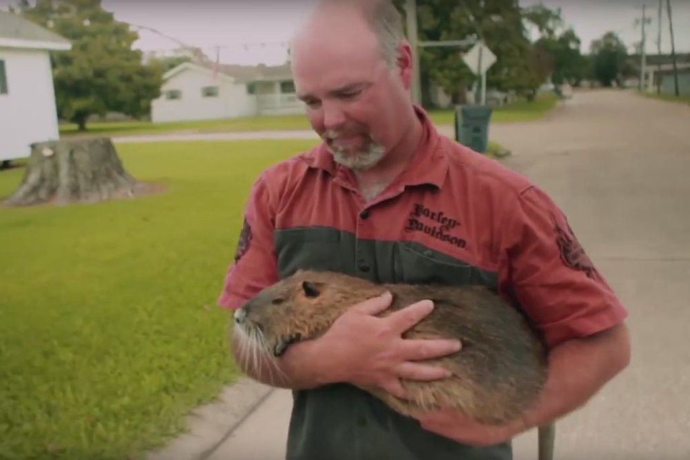 Rodents of Unusual Size - A story about giant swamp rats invading coastal Louisiana and the defiant people on the edge of the world, who are defending their communities, culture, and livelihoods from the onslaught of this curious and unexpected invasive species.(Documentary: 1hr & 11min)Film sponsor - Adirondack Premium Pest Services