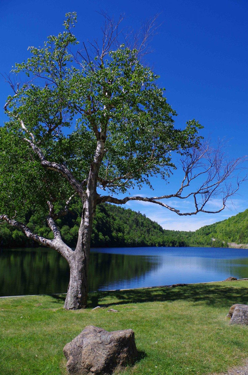 Tree & Lake 1.jpg
