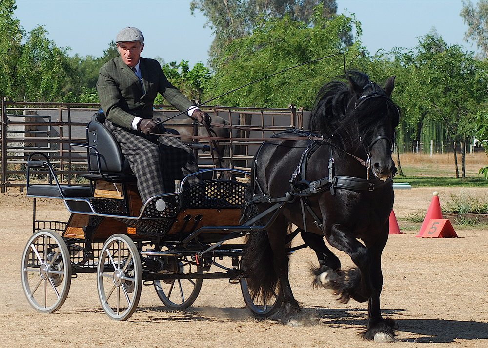 1996 imported stallion  Colliery Alick  driven by Roger Cleverly