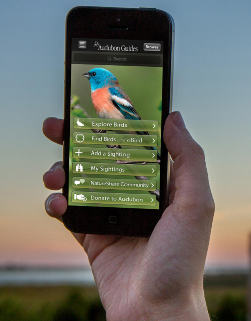 AudubonBirdGuideApp.png
