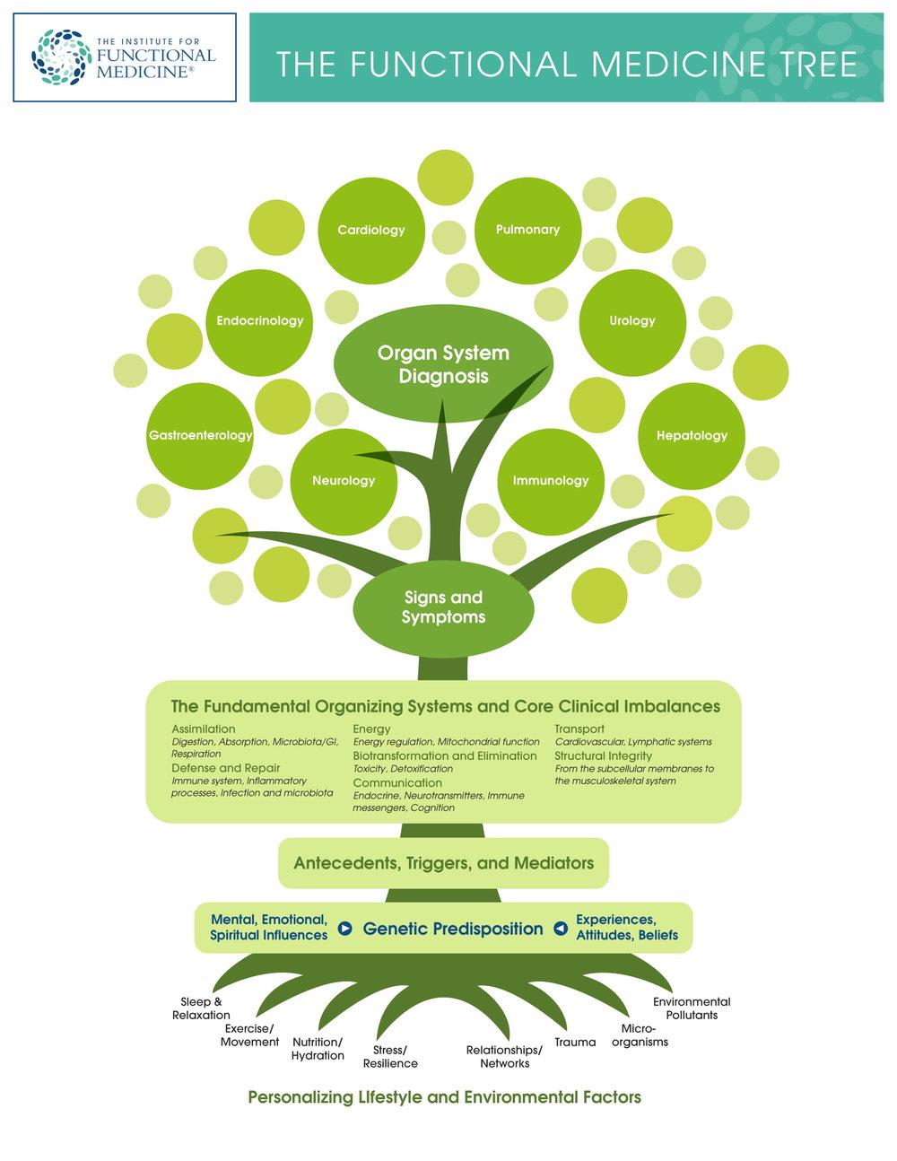 IFM tree.jpg