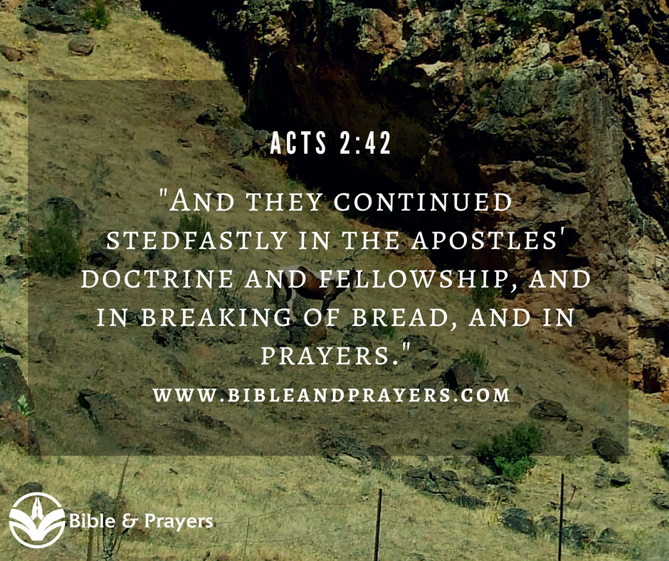 Bible Verse Acts 2-42
