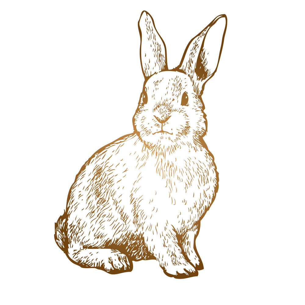 rabbit weybridge.jpg