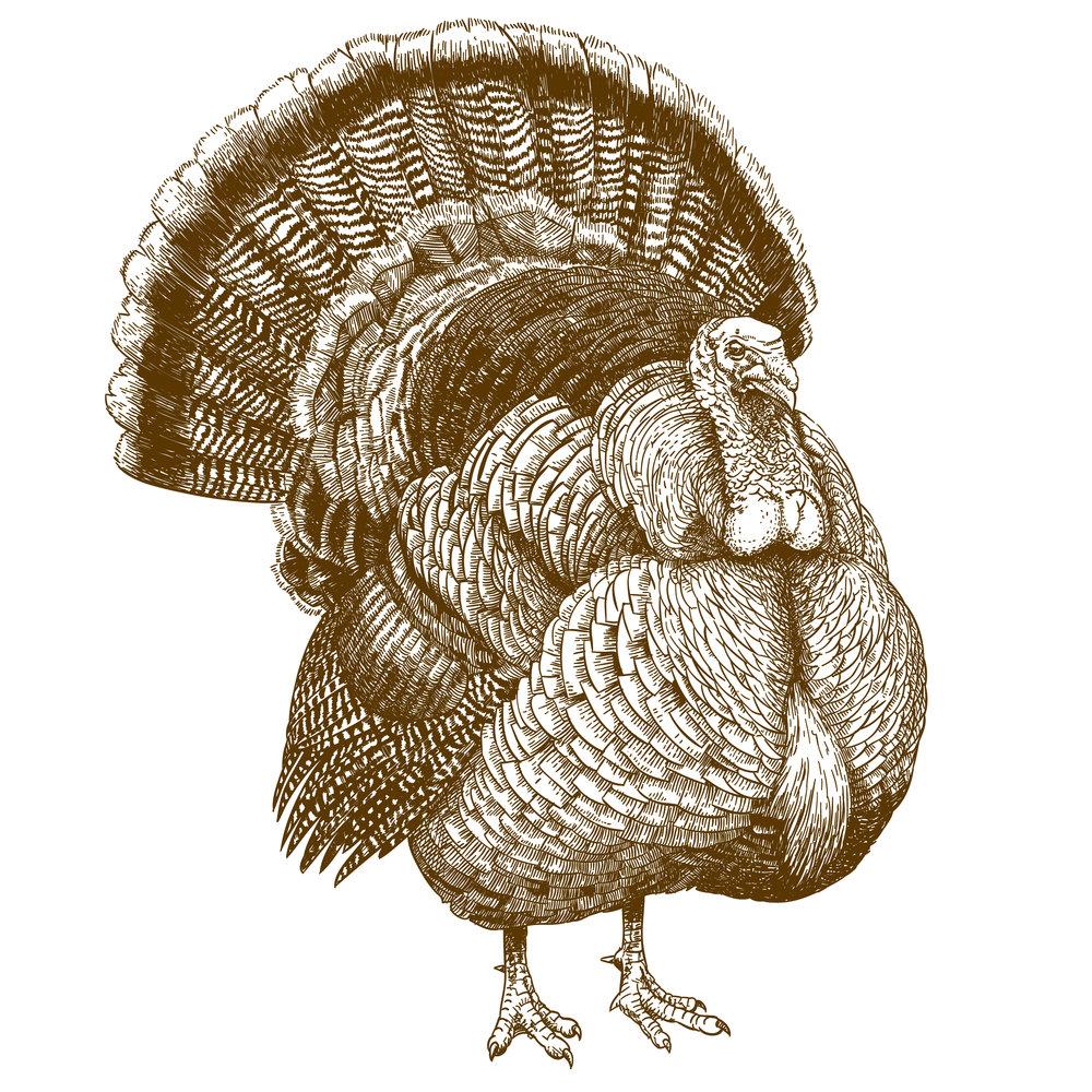 turkey sepia weybridge.jpg